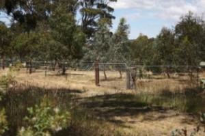 Horse yards 001