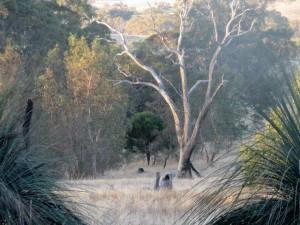 Wings open woodland