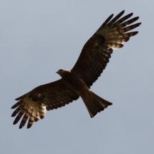 Wings Barossa Bird & Bush Retreat